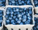 Экспортные поставки украинских замороженных ягод могут возобновиться уже в середине апреля