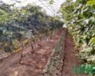 Три групи сільгоспвиробників з Херсонщини встановили гуміреактори для виробництва органічних добрив