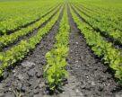 З наступного року в Україні буде шалений попит на органічне насіння та посадковий матеріал