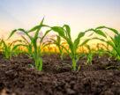 Аграрні розписки допоможуть сільгоспвиробникам України у підготовці до сівби