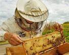 Держпродспоживслужба намагається попередити випадки отруєння бджіл