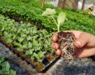 И вершки, и корешки, или Невидимые проблемы агрономии