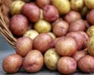 Насіннєва картопля може здорожчати на 30-40%