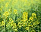 Урожайность сельхозкультур в Украине из-за недостатка влаги может снизиться на 30%