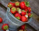 Произоводителям свежей ягоды в Украине нужно срочно находить новые каналы сбыта