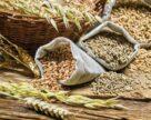 Рынок Причерноморья: зерно дешевело из-за паники, но началась стабилизация цен