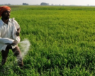 Минхимпром Индии заявляет о рекордных продажах удобрений