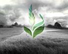 Що продавав і скільки заробив Аграрний фонд у першому кварталі 2020 р.