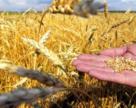 В Україні на жнивах будуть впроваджуватися цифрові інструменти