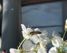 Українські науковці розробили систему захисту пасік від заразних захворювань та отруєнь бджіл