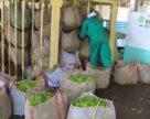 Кения пожаловалась на сбои в поставках удобрений из России