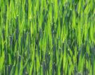 KSG Agro занял первое место среди эффективных публичных агрохолдингов рейтинга «ТОП-100»