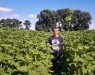Что для пшеницы хорошо, то для подсолнечника плохо. Урожай этой культуры в Украине под угрозой