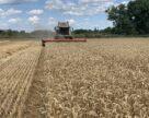 Марокко занимает 5-ю строчку в рейтинге крупнейших импортеров украинской пшеницы