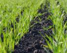Восени озимим посівам потрібен буде стимул