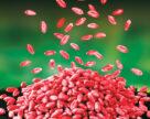 Новинка у ряді інсекто-фунгіцидів UKRAVIT забезпечить високу врожайность озимих зернових