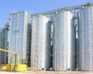 Темпы экспорта украинской пшеницы соответствуют показателям меморандума