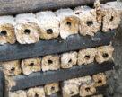 На Миколаївщині стартувало виробництво паливних брикетів завдяки канадському гранту