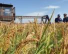 Аграриям нужны льготы по НДС и ЕСВ при потере урожая