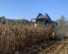 По итогам 2019/20 МГ из Украины было экспортировано 28,7 млн тонн кукурузы