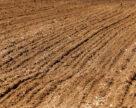 Дослідження ґрунту як передумова високої врожайності