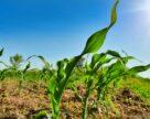Економічний ефект від переважного права на землю може скласти 14 доларів/га
