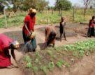 «УРАЛХИМ» и «Уралкалий» начнут поставки удобрений в Судан в 2021 году