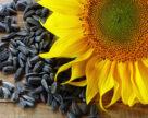 Перевірка на стійкість:  Чи володіє соняшник стійкістю до певних гербіцидів?