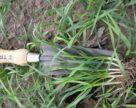 Зимові дослідження для високої майбутньої врожайності озимих культур