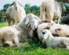 Займатися тваринництвом в Україні не вигідно