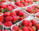 Львовский ягодный кооператив расширяет площади под органической продукцией