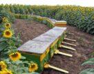 Аграрій: Уникнути отруєнь комах допоможе комунікація з бджолярами