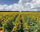 Аграрії-новатори отримали спеціальну відзнаку ALFA Smart Agro