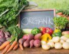 Україна експортувала 300 тонн органічних продуктів
