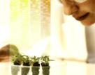 Bayer выделил гранты для 24 ученых (Bayer Grants4Ag)
