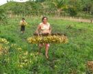 В Никарагуа ожидается небольшой обвал рынка СЗР и агрохимикатов